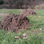 mole catcher in colchester